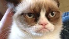 Grumpy Cat, hate DLC
